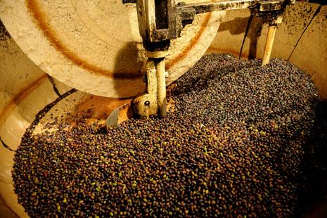 Moulin broyant des olives