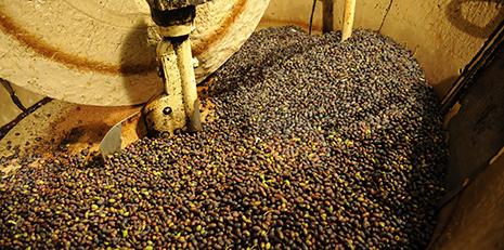 Olives broyées par la meule du moulin